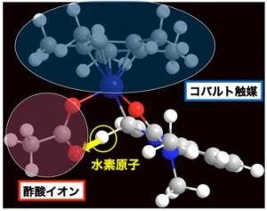 理論計算によるシミュレーションモデル:コバルト触媒(中央上部)と酢酸イオン(左下部)が原料(右下)に対して同時に作用することで、狙った位置の炭素-水素結合だけが活性化される様子が明らかとなった (出所:東京大学/星薬科大学)